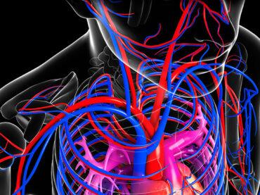 Cirurgia Vascular / Angiologia